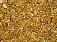 Cassia Torea Seeds