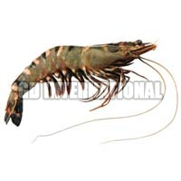 Frozen Tiger Prawn