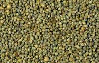 Animal Millet Feed