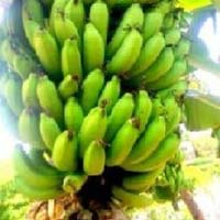 Green Banana G-9