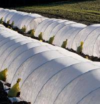 Crop Covers