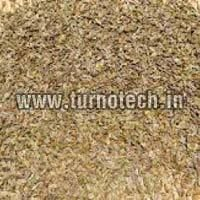 Helichrysum Italicum Seeds