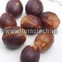 Myristica Seeds