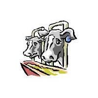 bull feed