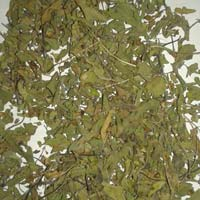 Tulsi Leaves