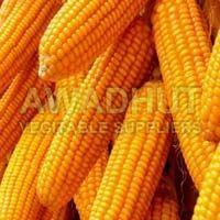 Maize