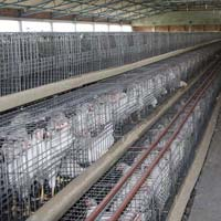 Poultry Chicks Cage System