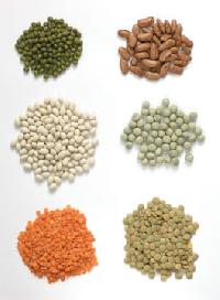 Organic Bean