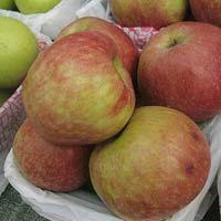 Fresh Chaubattia Anupam Apple