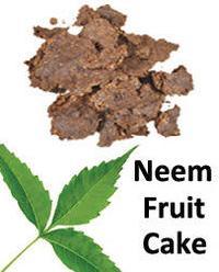 Neem Fruit Cake