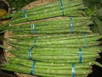 Fresh Drumsticks