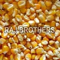 Yellow Corn Feed