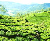 Idukki Tour Packages