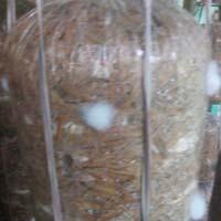 Mushroom Bag