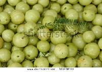 Fresh Amla Fruit