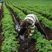 Plantation Services