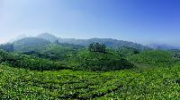 Bangalore Munnar Tour Packages