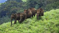 Bangalore to BR Hills & MM Hills Tour Packages