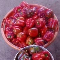 Colour Capsicums