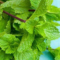 Japanese Mint Leaves