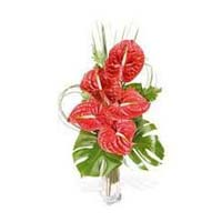 Fresh Anthurium Flowers