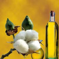 Cotton Solvent Oil