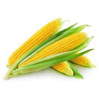 American Yellow Corn