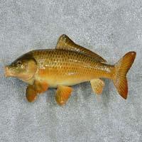 Hatched Grass Carp Fish