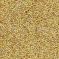 Spiked Millet