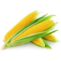 Yellow Maize