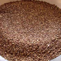 Kodo Millet Seeds