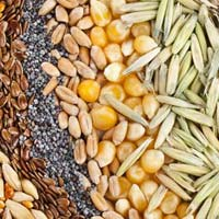 Grains manufacturers suppliers exporters in india for Kitchen xpress overseas ltd