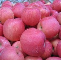 Kashmiri Apple