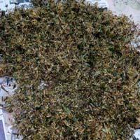 Stevia Seeds & Senna Seeds