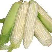 Fresh White Corn