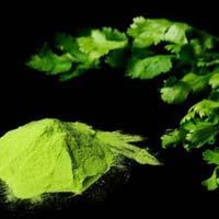 Spray Dried Coriander Powder