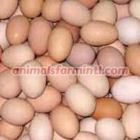 Brown & White Eggs