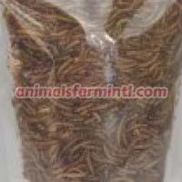 Dried Mealworms - 125gm
