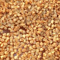 Bhut Jolokia Chilli Seeds