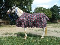 Ve-r-008 Horse Rug