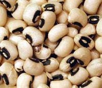 Black Eyed Pea