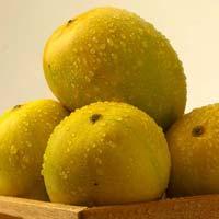 Alphonso Mangoes