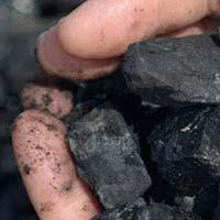 USA Pet Coal