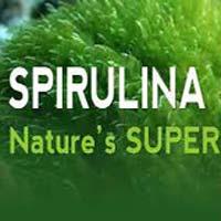 Pure Spirulina Capsules