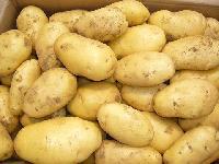Cheap fresh potato