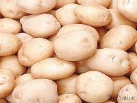 High quality fresh potato