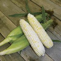 White Corns