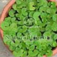 Herbal Brahmi Powder