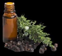 Herbal Scalp Conditioner