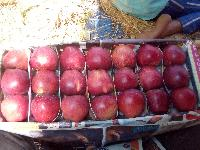 Shopian apples